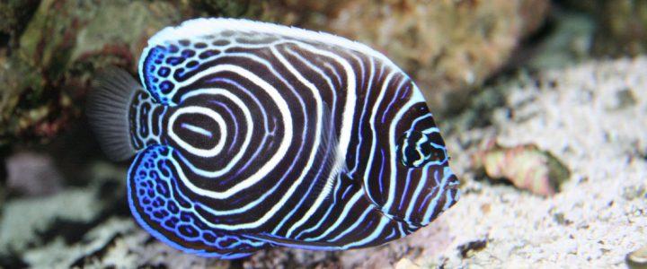 Australia diving trip